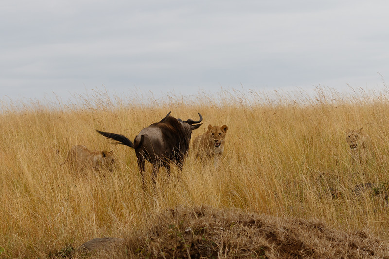 Kenya 2015-07938.jpg