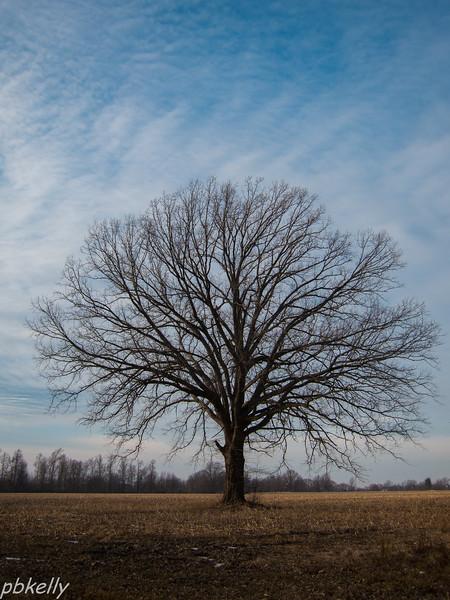Jeanne's tree 122713.jpg