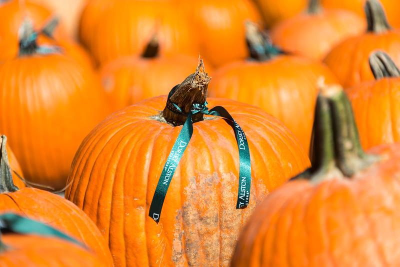 Dorsey Alston Pumpkin Patch (3 of 16).jpg