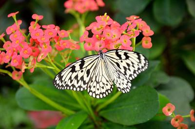 Key West Butterfly Conservatory/Key West/FL - Mar. 2013