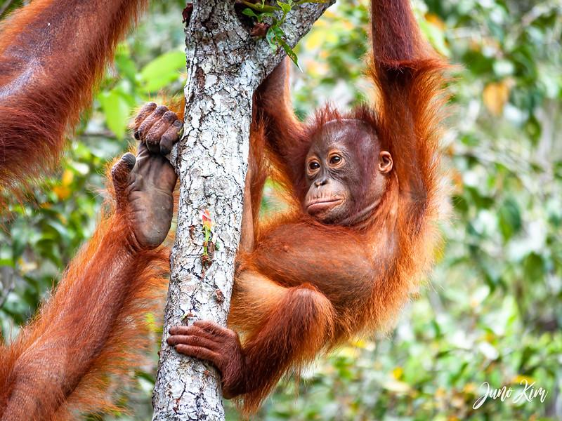 2012.10.07_Borneo_DSC_7103-Edit-Juno Kim.jpg