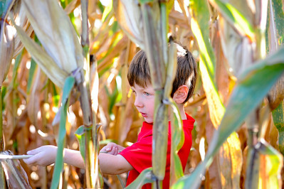 The Great Pumpkin Patch 2013