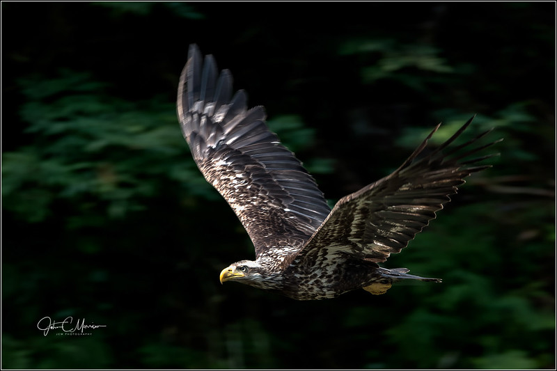 J85_5407 Eagle LPN r1 W.jpg
