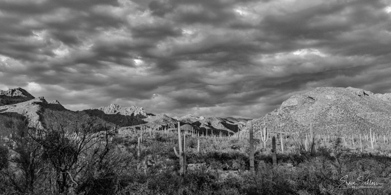 Sabino Sunset 1-12-2019d-.jpg