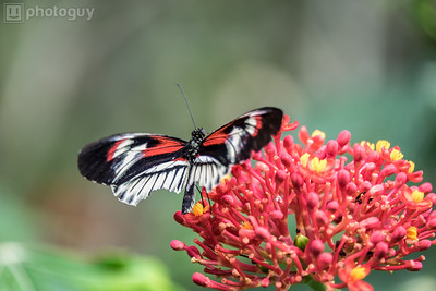 20140628_BUTTERFLY_WORLD (7 of 28)