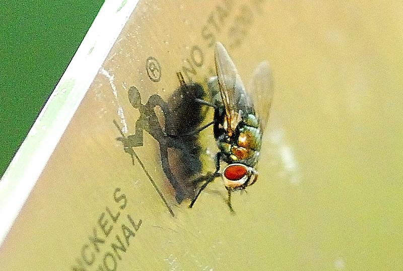 Cutlery Fly.jpg