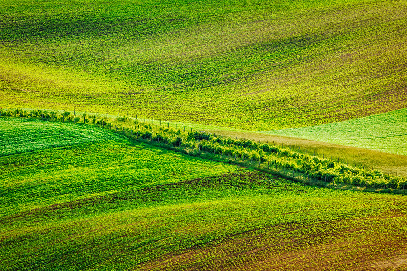 Abstract pattern of rolling fields