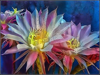 Cacti Fantasy