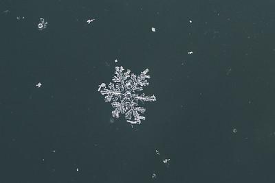 2016_0116 Snow