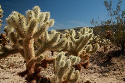 Joshua Tree, CA (Mar 2009)