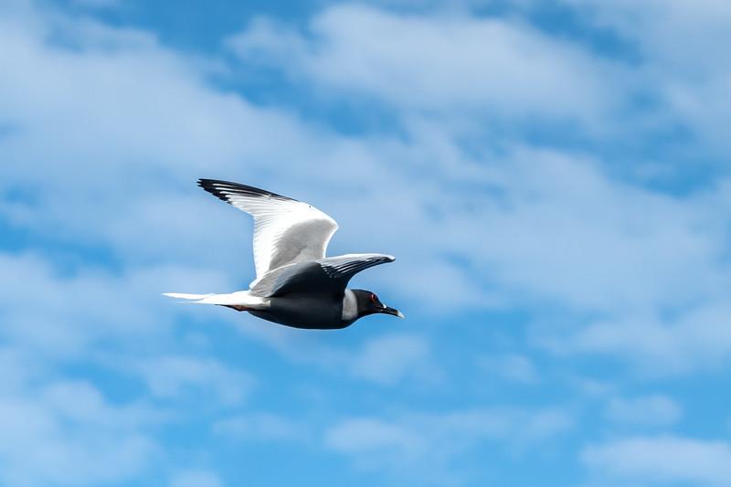 Galapagos-3816.jpg