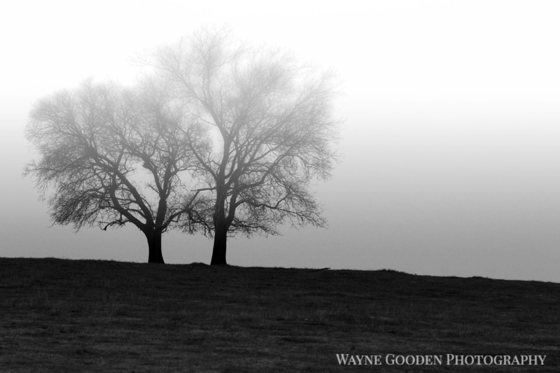 Lonesome Foggy Trees