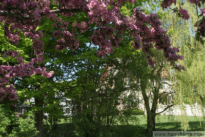 Vermont Spring 2008