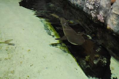 Living Seas Aquarium - Park Ridge
