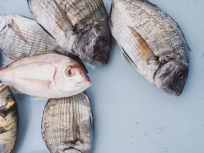 marseille fish market 3.jpg