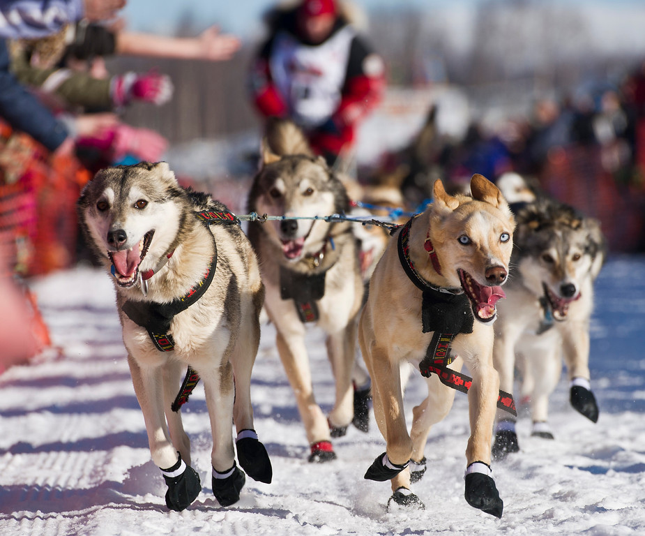 . Aliy Zirkle\'s team runs across Willow Lake as the Iditarod Trail Sled Dog Race began, Sunday, March 2, 2014, in Willow, Alaska. (AP Photo/Anchorage Daily News, Marc Lester)
