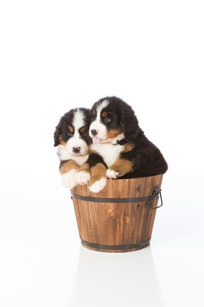 2013-Pearson Pups-Jun02-0416.jpg