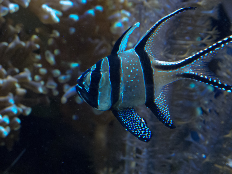 Angel Fish?