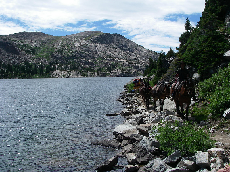 Many hikers are using horses.