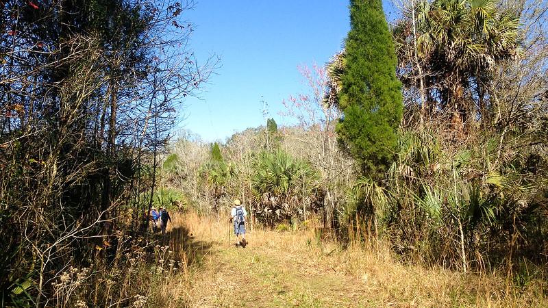 Path near cedars and sweetgum