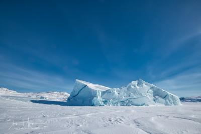 Polar Bear-Baffin Island Canada