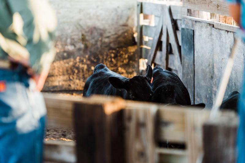 Barthle Cattle-2 (83 of 102).jpg