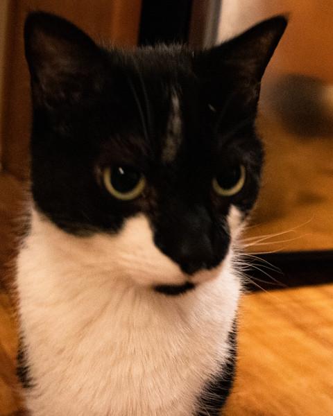 355 ( 12-29-19) Meet Mookie (2).jpg