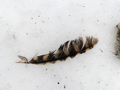 20130311 Emily Tract Bird Sign