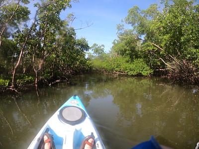 9AM Mangrove Tunnel Kayak Tour - Castleberry