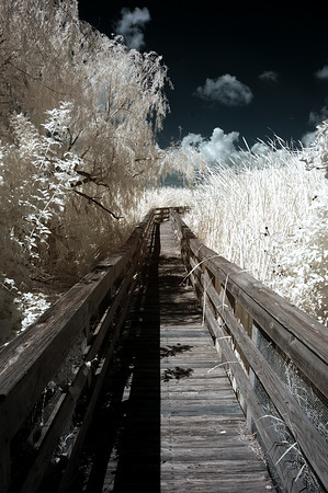 LEONA BELLE TURNBULL BIRDING CENTER AND PORT ARANSAS 2012 IR IMAGES