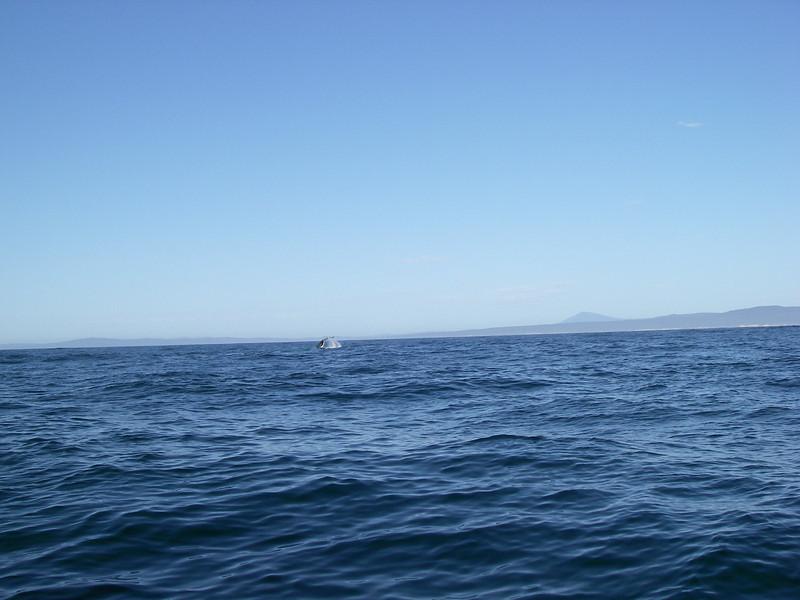 Sydney trip and Mirimbula 061.JPG