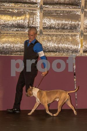 June 2nd & 3rd Lakeland Dog Show
