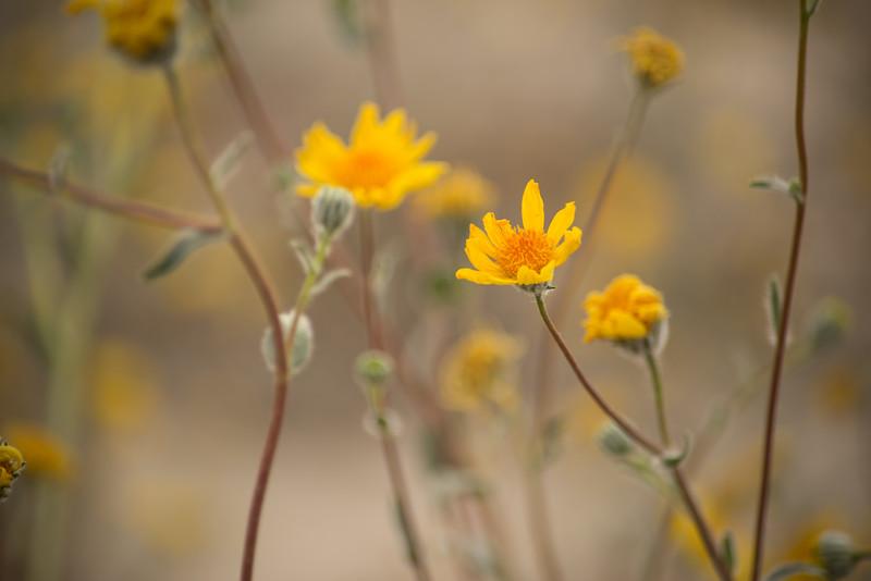 daisies-41.jpg