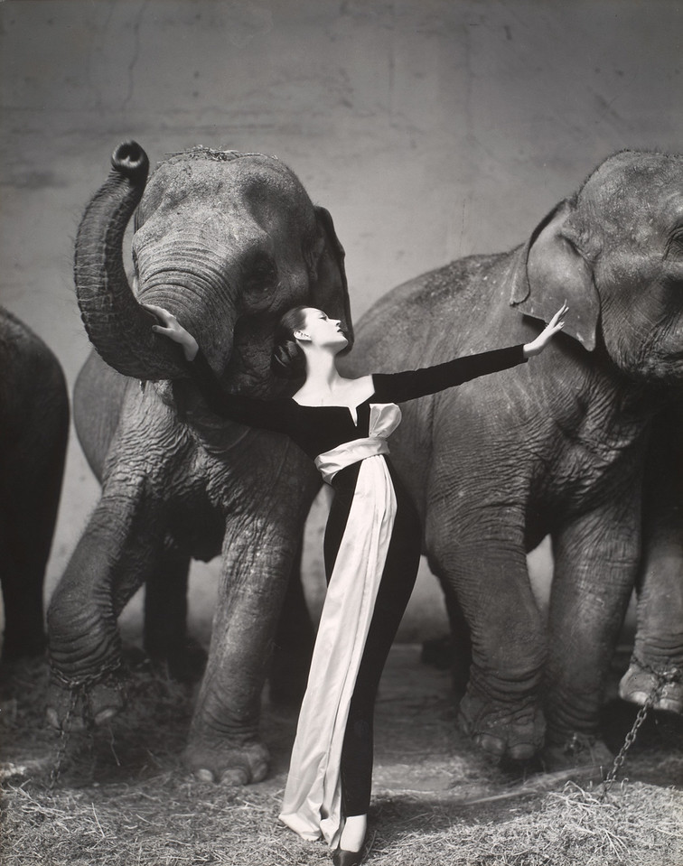 Richard Avedon - Dovima with Elephants
