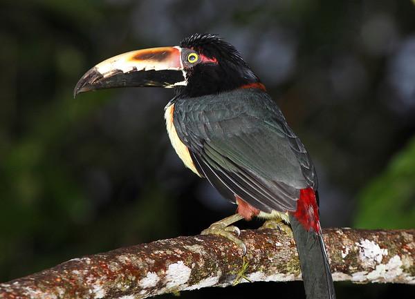 Aricari Costa Rica