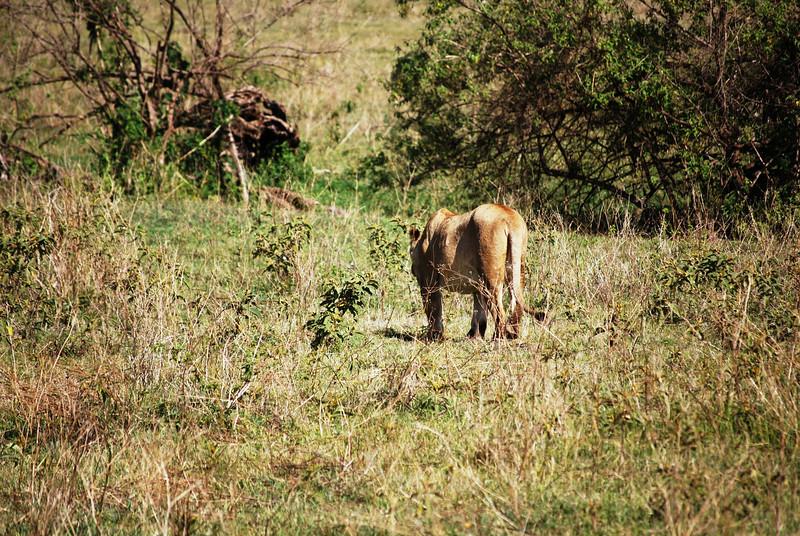 Ngorongoro (79).JPG