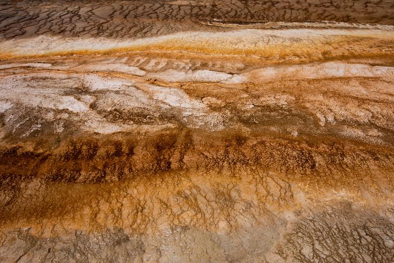 WVWS_Yellowstone-2289.jpg