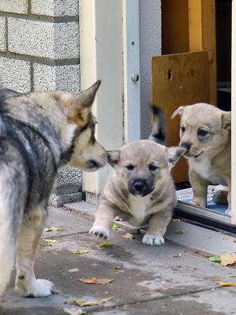 2013-06-15 4 Puppybezoek Markelo