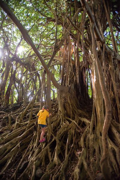 Hawaii2019-214.jpg