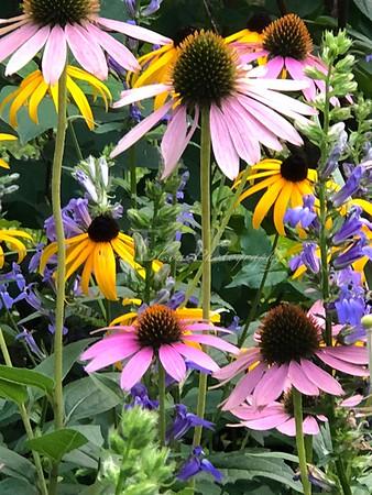 A Bouquet Garden