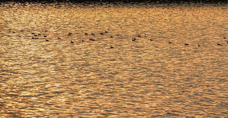 Sunset, Alviso Marina County Park, Alviso, California, 2010