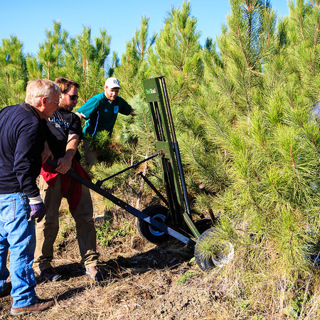 Tree Moving (10.12.12)