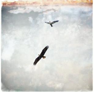 Birds & Birds of Prey