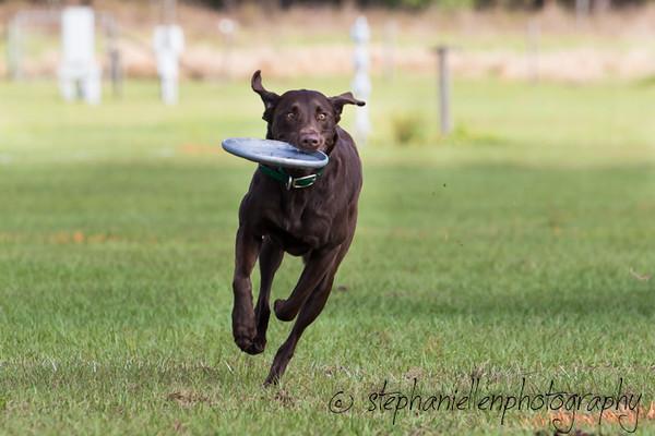 _MG_2588Up_dog_International_2016_StephaniellenPhotography.jpg