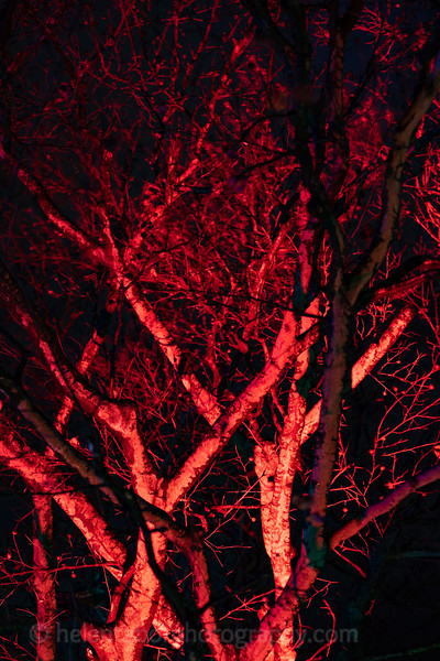 Illuminated Winter Wonderland by night-21.jpg