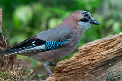 Bird Hide in Jakobstad