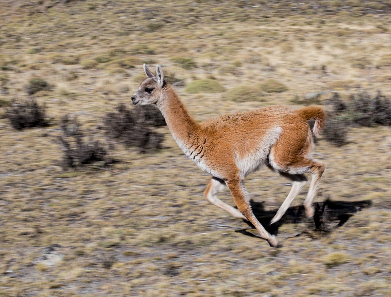 0623_Torres del Paine_MG_2518.PRINT.jpg