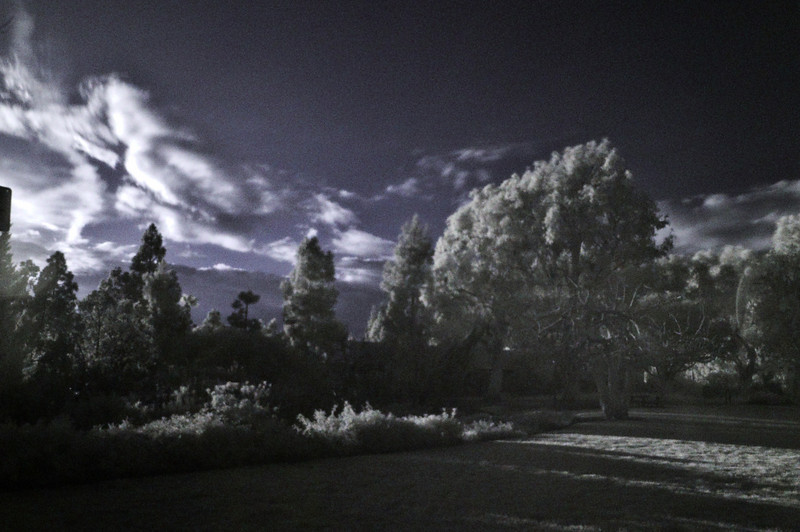 """Taken in my neighborhood park using a 850 nm infrared filter and converted to """"false color"""" using the standard blue/red channel swap."""