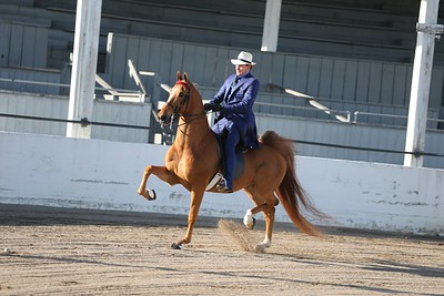1A. Amateur Gentlemen 5 Gaited