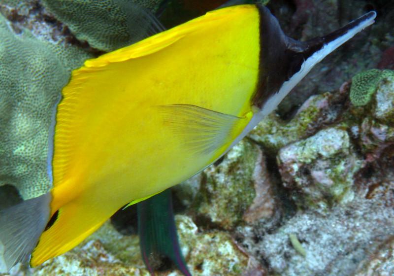 469- 20080416- Hawaii 20-Snorkelling IMG_0666.jpg